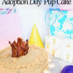 Tasty cakes for dogs