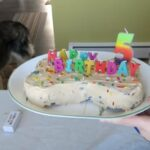 cake for pets